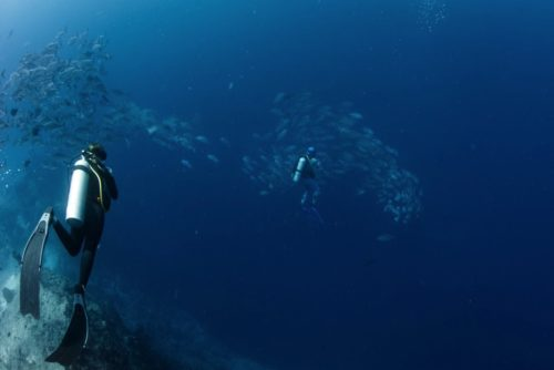 Diving in Fiji | Marchay